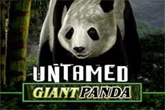 Untamed Giant Panda slot review