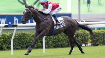 Harmony N Blessed wins first-up with Blake Shinn on board