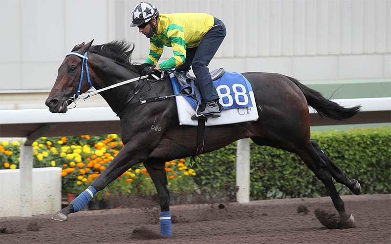 Joao Moreira is leading the top jockeys in Hong Kong for 2021 season.