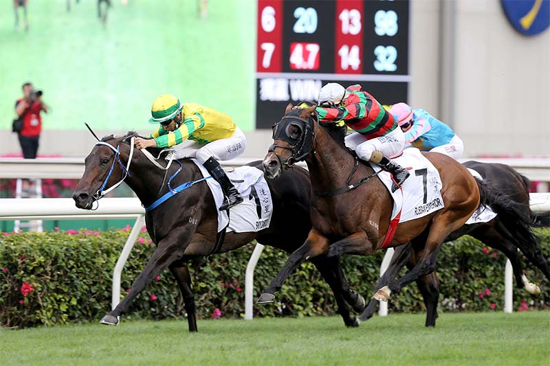 Sky Darci can win the G3 Lion Rock at Sha Tin on May 30 2021